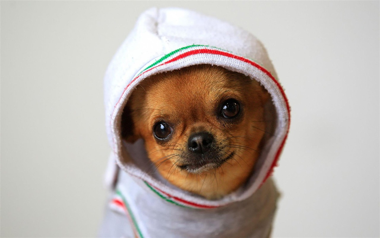 Funny Dog Wallpaper 98 Download Wallpapers 1280x800