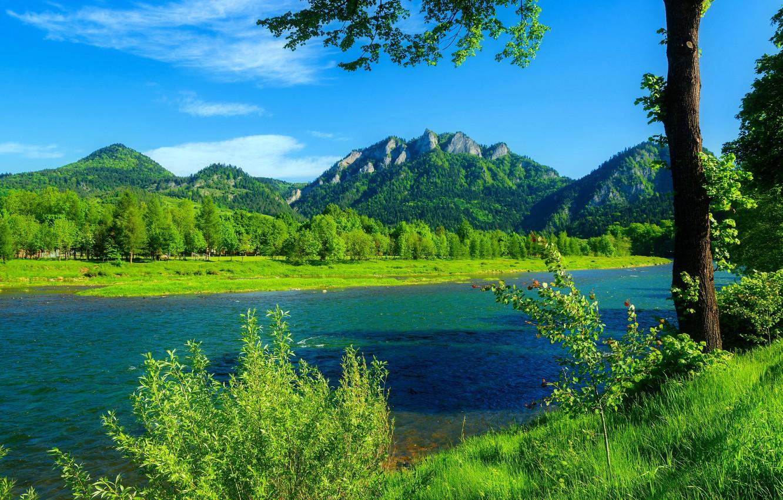 Wallpaper forest river mountains blue sky Poland green grass 1332x850