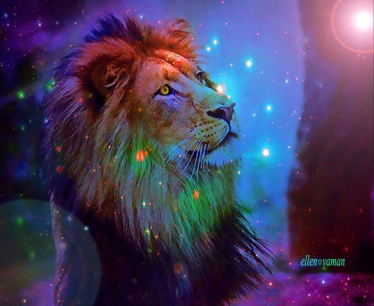 Rainbow Lion Car Interior Design 736x603