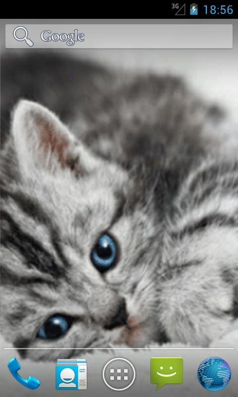 50 Live Cat Wallpapers On Wallpapersafari
