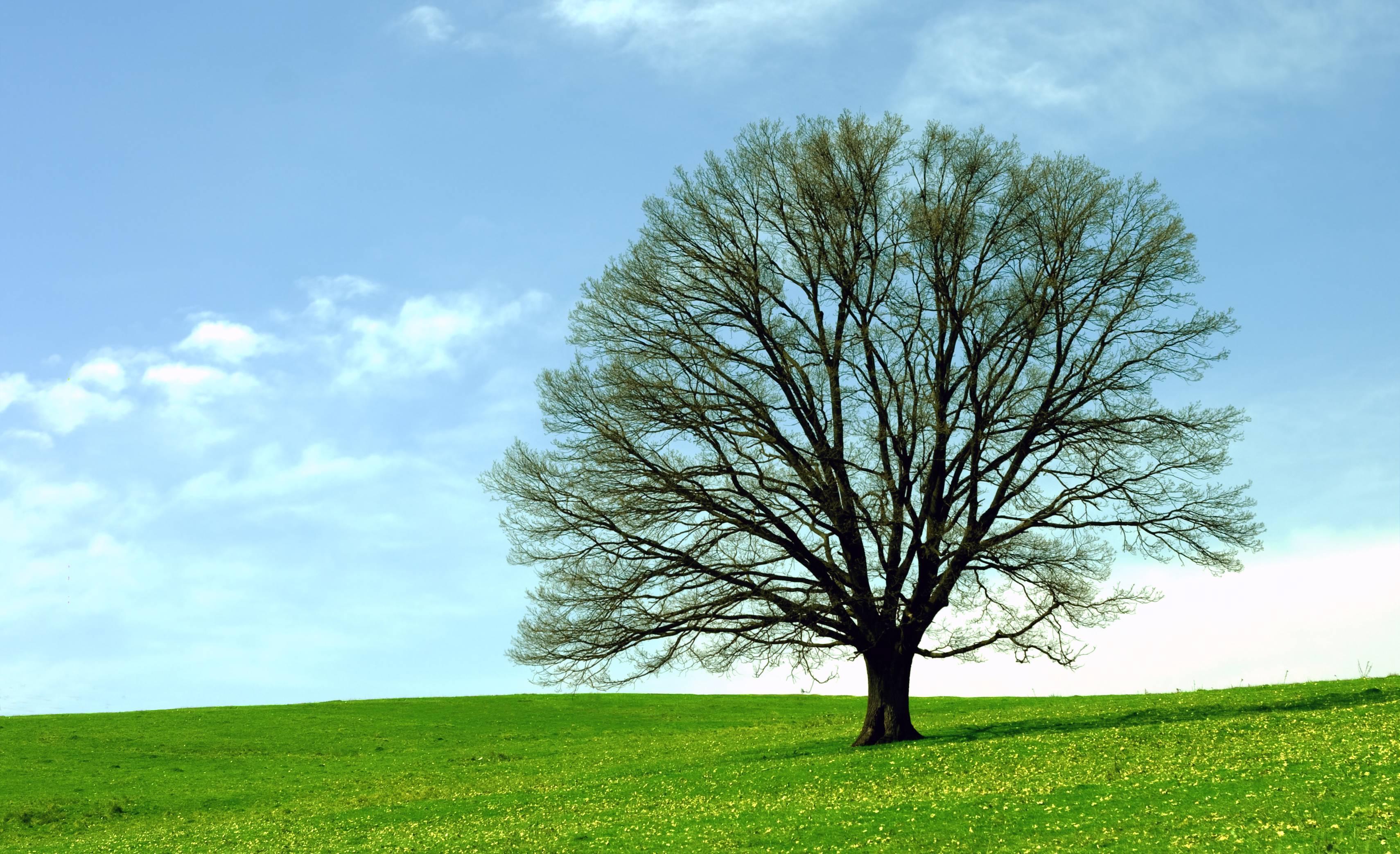 Oak Tree Wallpapers 3420x2088