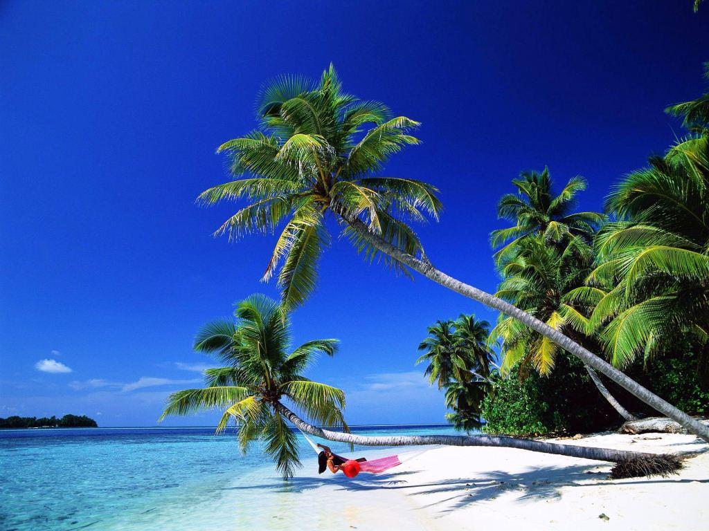 definition wallpapercomphotobeautiful palm tree wallpaper22html 1024x768