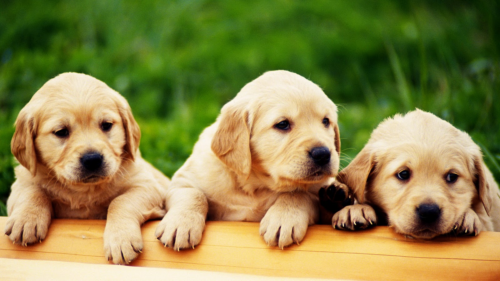 Cute Puppies HD Wallpapers Collection Download Wallpapers in HD 1600x900