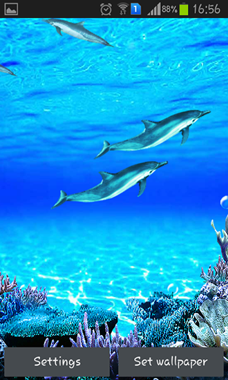 Dolphins sounds live wallpaper for Android Dolphins sounds 330x550