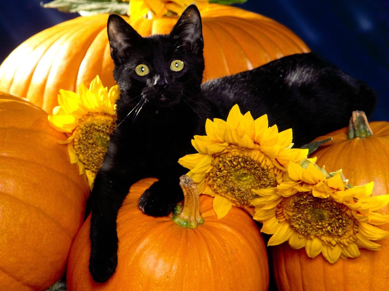 Playful Pets   Halloween Wallpaper 25517126 1280x960