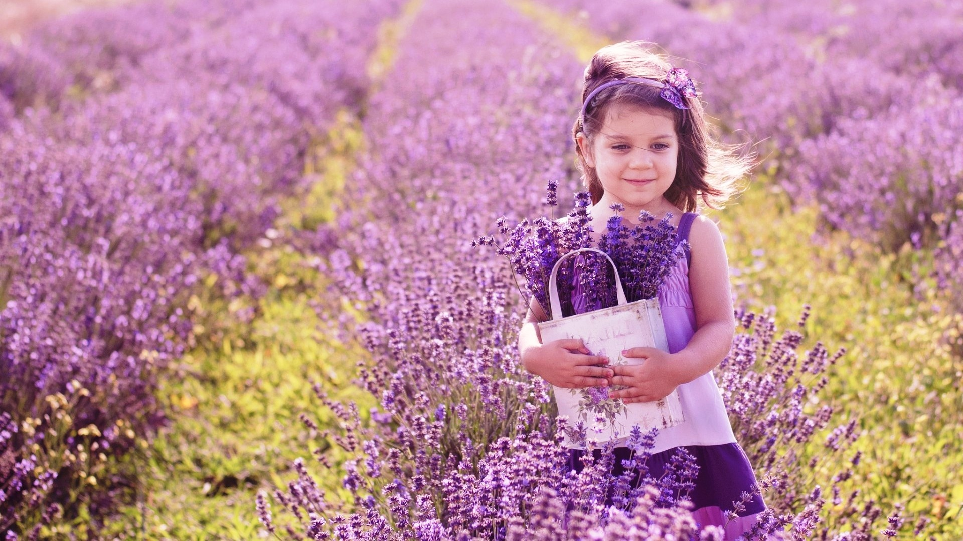 Lavender Flowers Background   Wallpaper High Definition High Quality 1920x1080