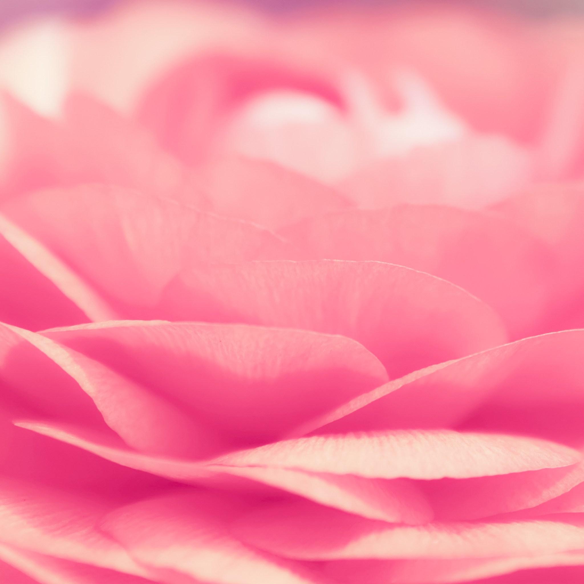 Pink ipad wallpaper wallpapersafari - Red rose petals wallpaper ...