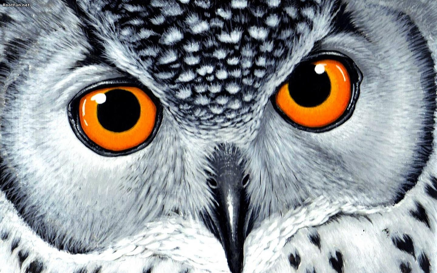High Resolution Owl Wallpaper Wallpapersafari