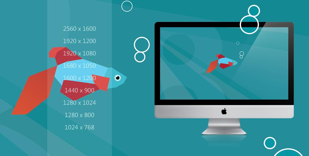 Windows 8 Beta Fish wallpaper pack by Draganja 1000x506