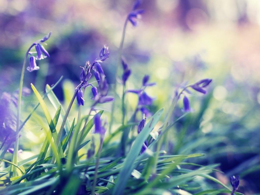 1024x768 desktop wallpaper spring flowers - wallpapersafari