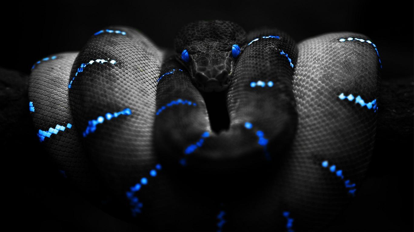 snakes snake eyes 593962 1366x768
