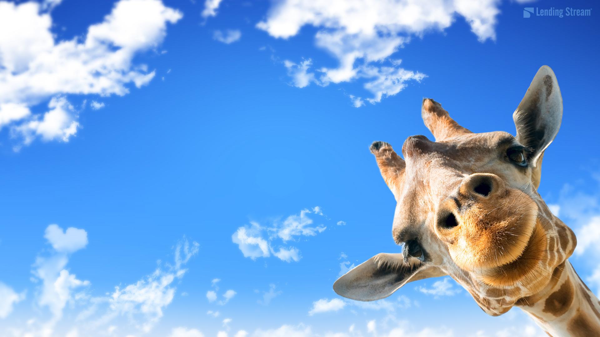 Giraffe Desktop Background WallpaperSafari