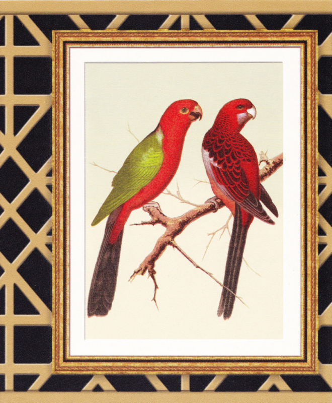 BEAUTIFUL TROPICAL BIRDS IN FRAME Wallpaper bordeR Wall 660x800