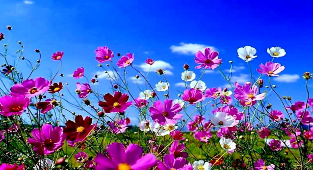 Spring Wallpapers For Desktop Wallpapers For You 1270x691