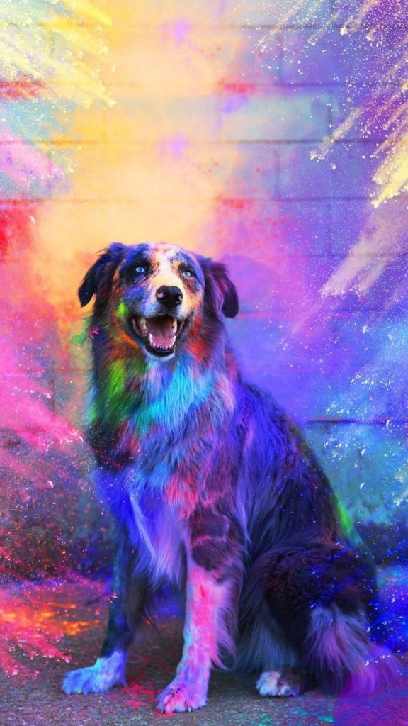 Wallpaper Animals 41563 576x1024