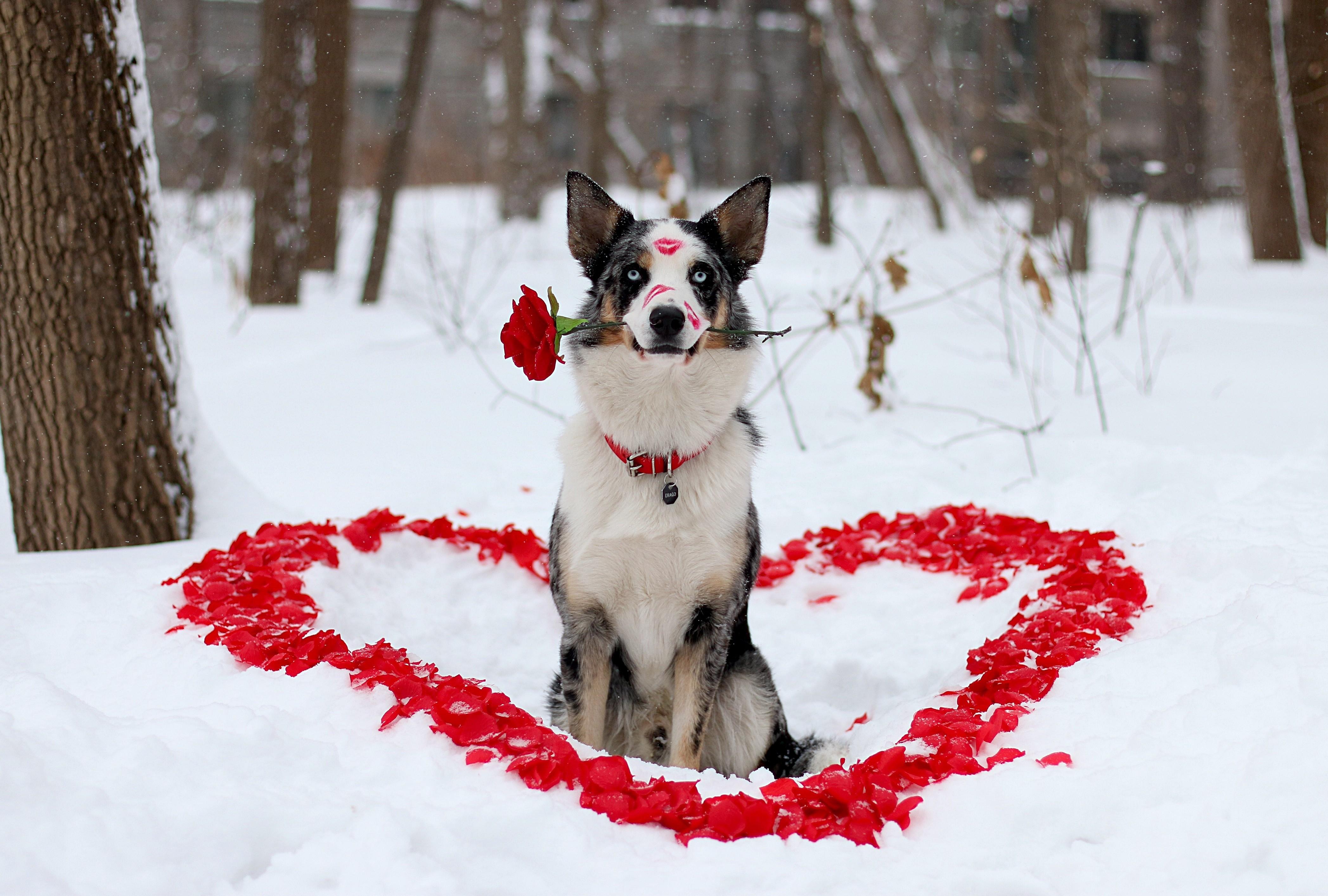 Dog And Cat Saint Valentines