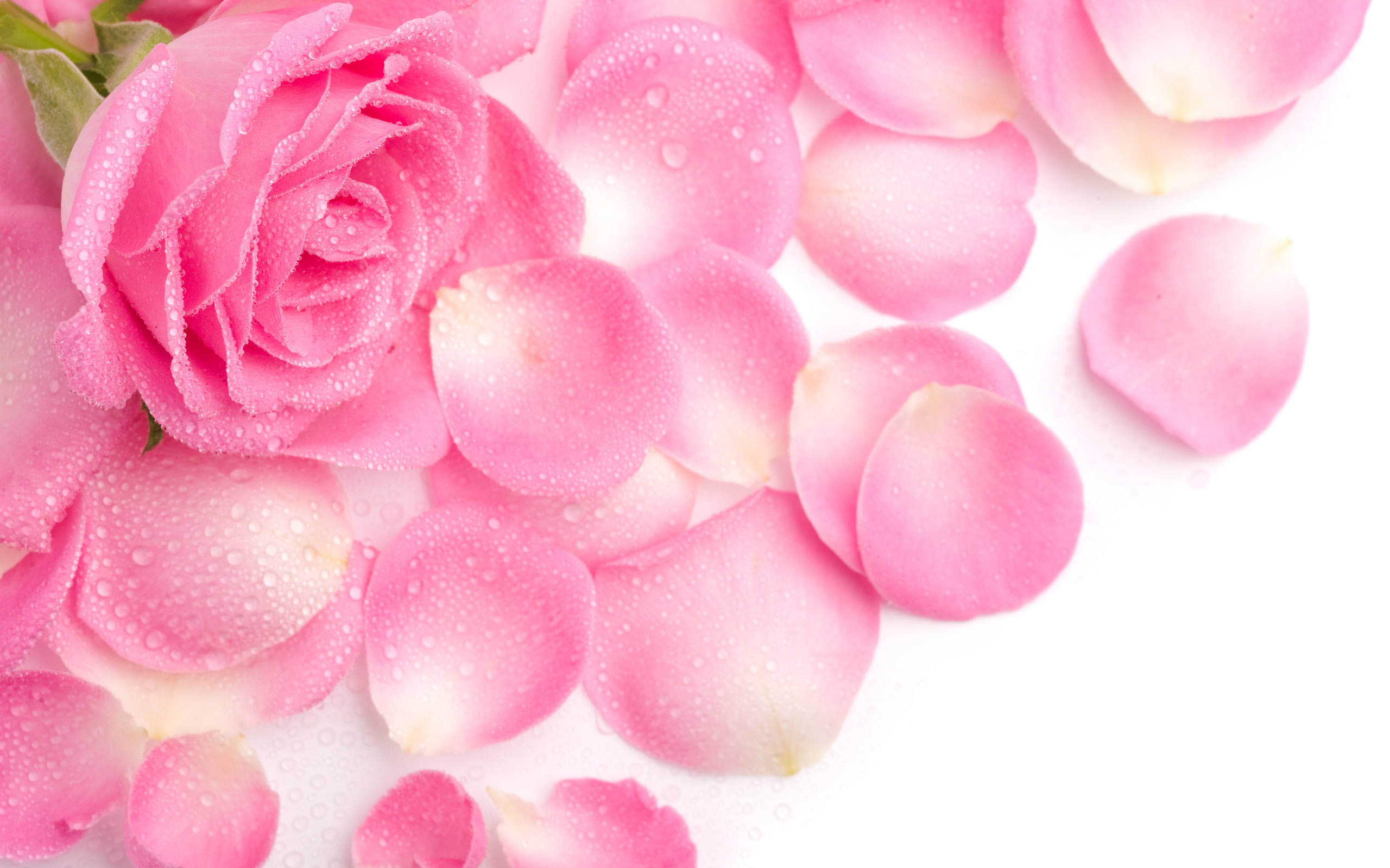 Cute Love Wallpapers CollectionsDesktop Wallpapers collectionLaptop 2560x1600