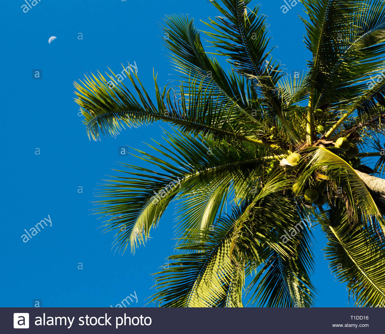 Tropical desktop background with blue skies the moon and a single 1300x1129