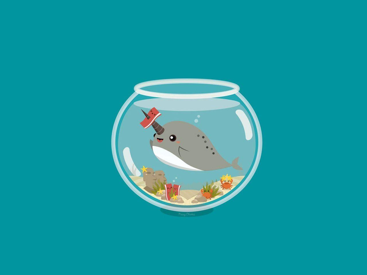Cute Narwhal Wallpapers   Top Cute Narwhal Backgrounds 1280x960
