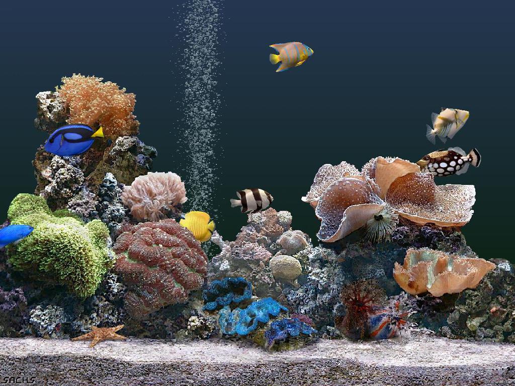 Free fish wallpaper and screensavers wallpapersafari - Fish tank screensaver pc free ...
