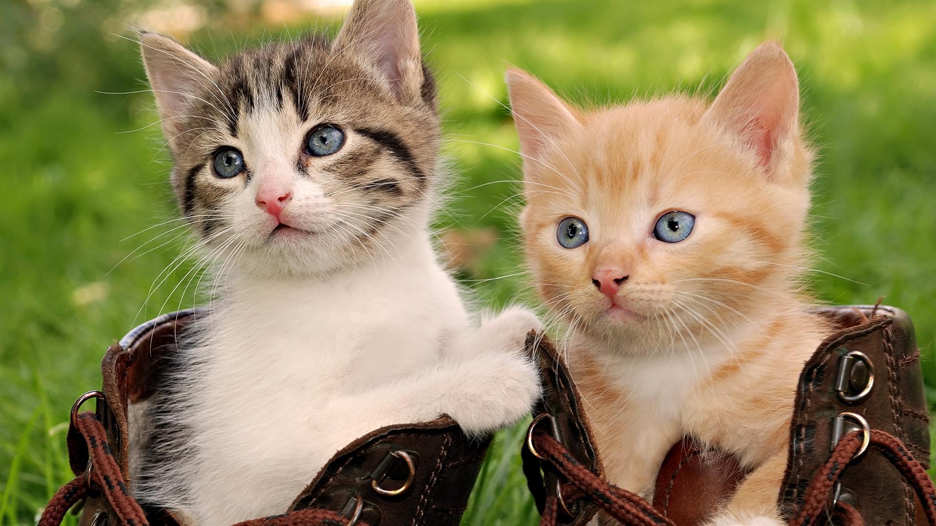 Wallpaper download cat - Hd Cat Pictures Wallpaper Hd