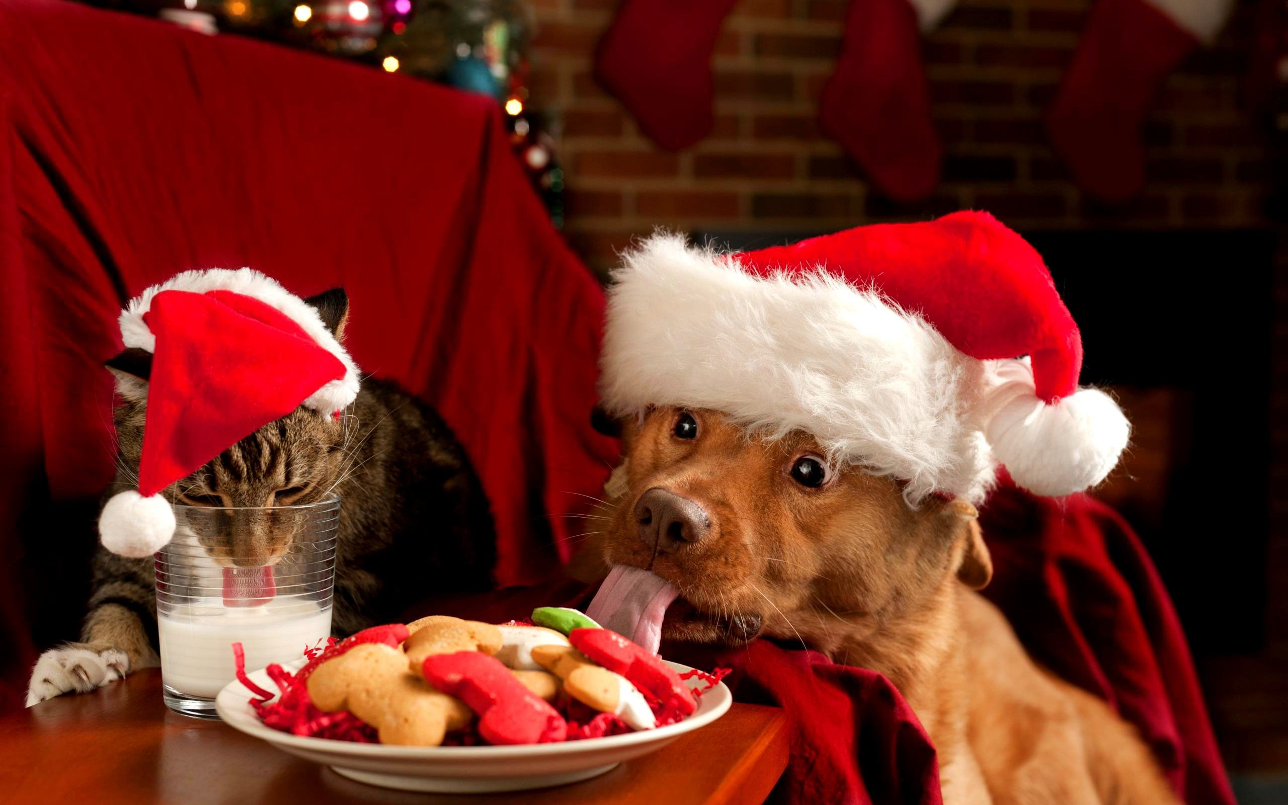 62 Christmas Puppies Wallpapers on WallpaperPlay 2560x1600