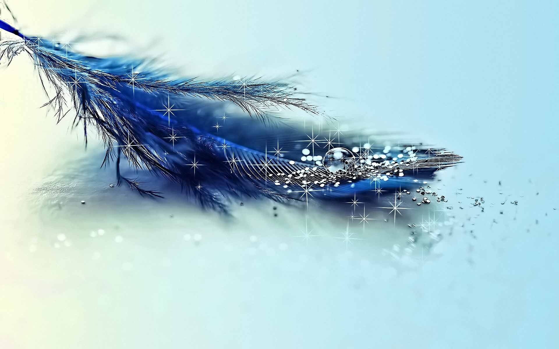 Download the Blue Feather and Glitter Wallpaper Blue Feather and 1920x1200