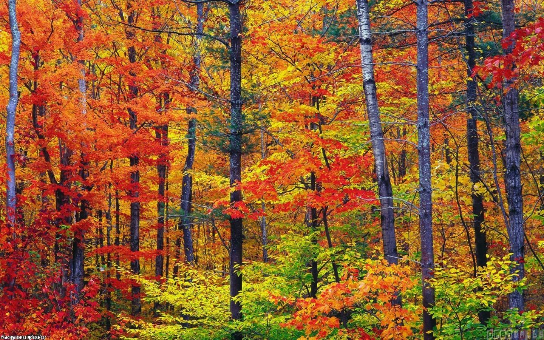 Autumn colors wallpaper #15426 - Open Walls