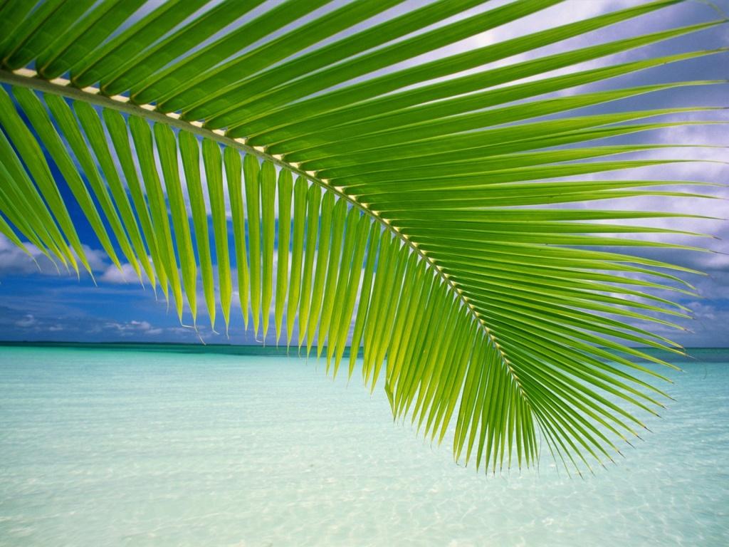 Tropical Lagoon Wallpapers Desktop Wallpapers 1024x768