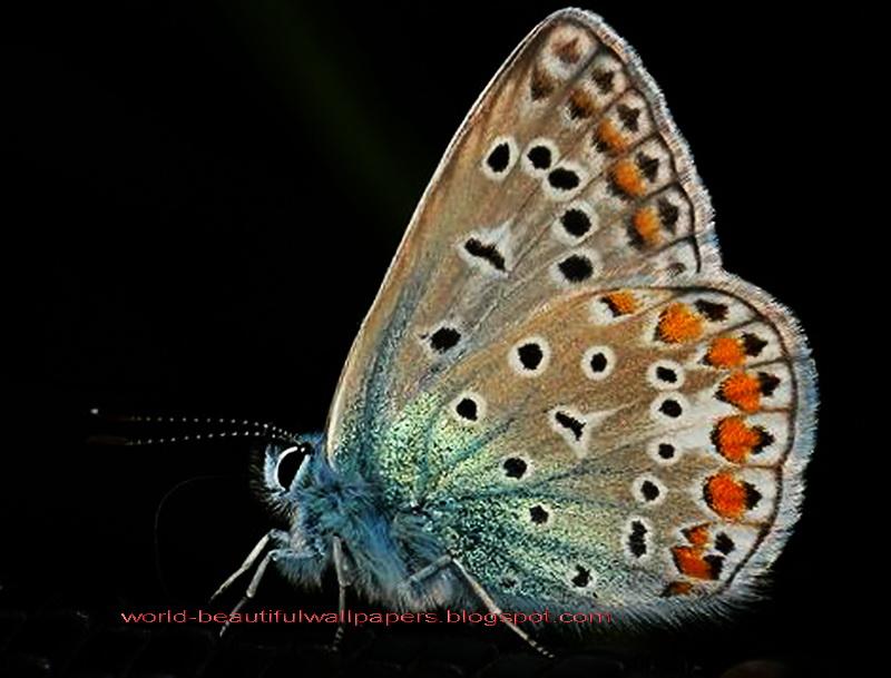 Beautiful Wallpapers Beautiful Butterflies Wallpaper 800x609