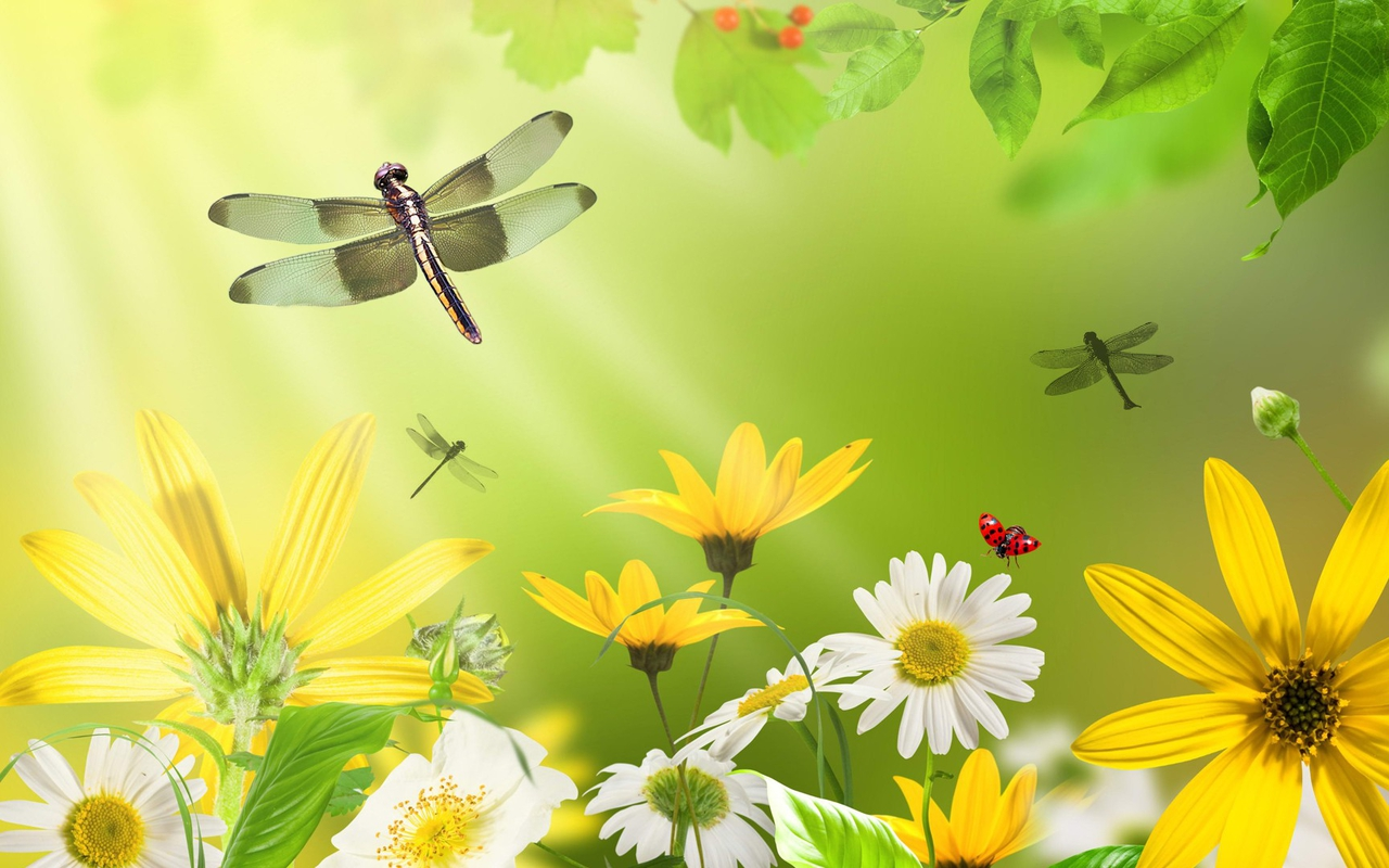 Dragonflies and hopefully introduce some new characters for our Insect 1280x800