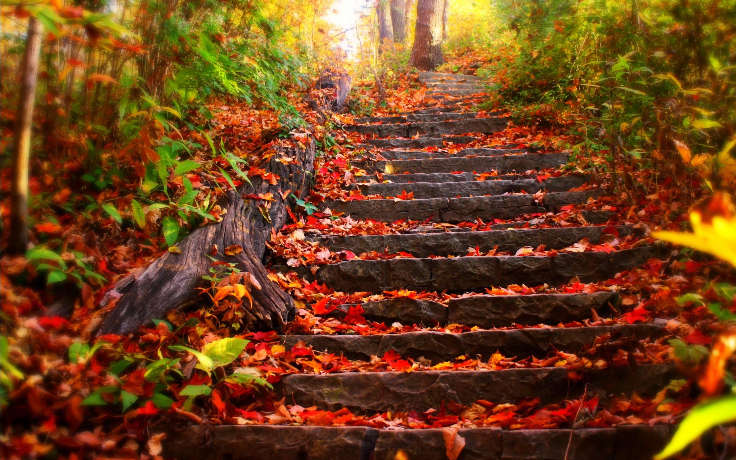 Autumn Desktop Wallpaper Backgrounds 2560x1600