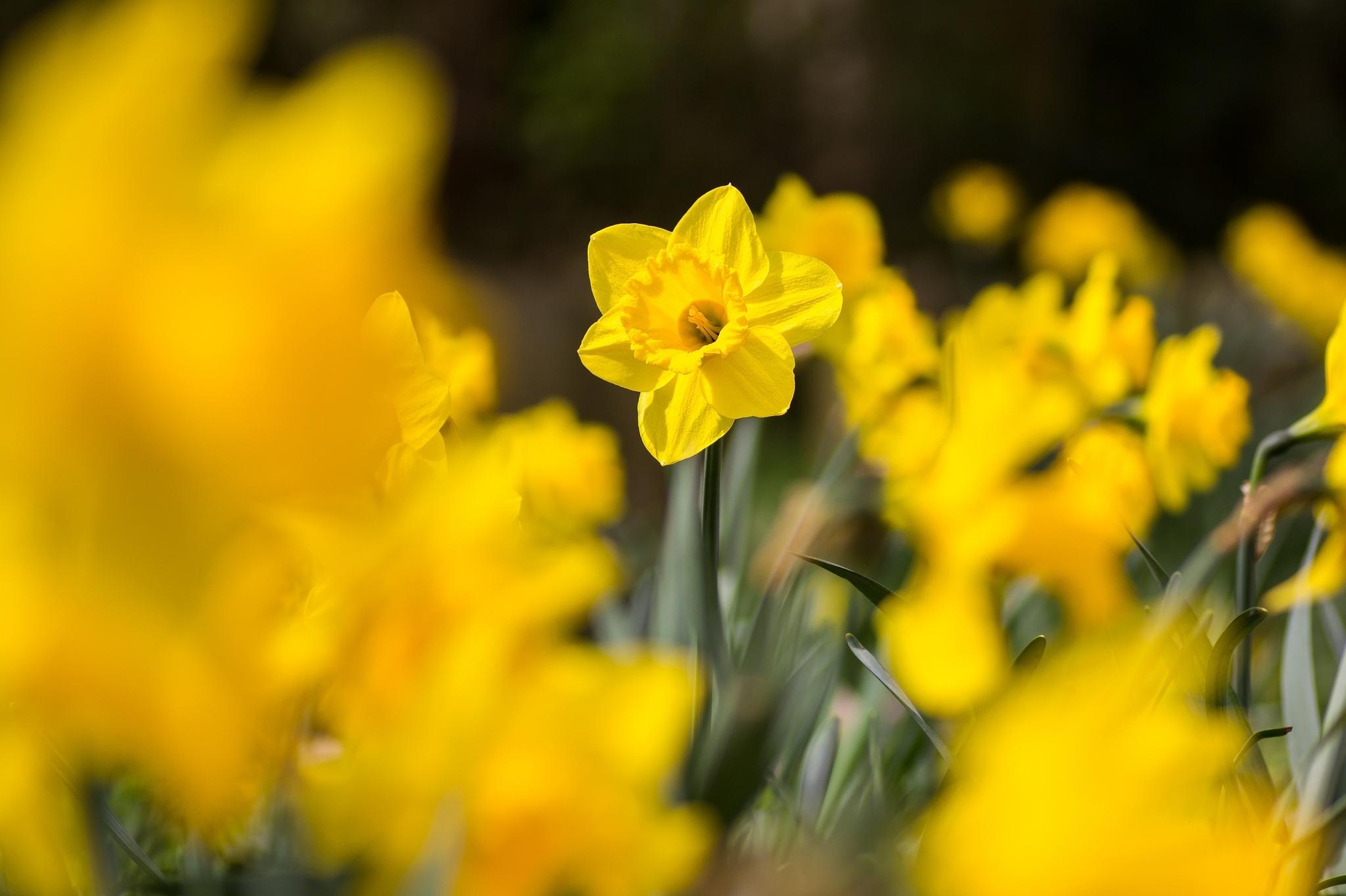 цветок желтый flower yellow  № 1246559  скачать