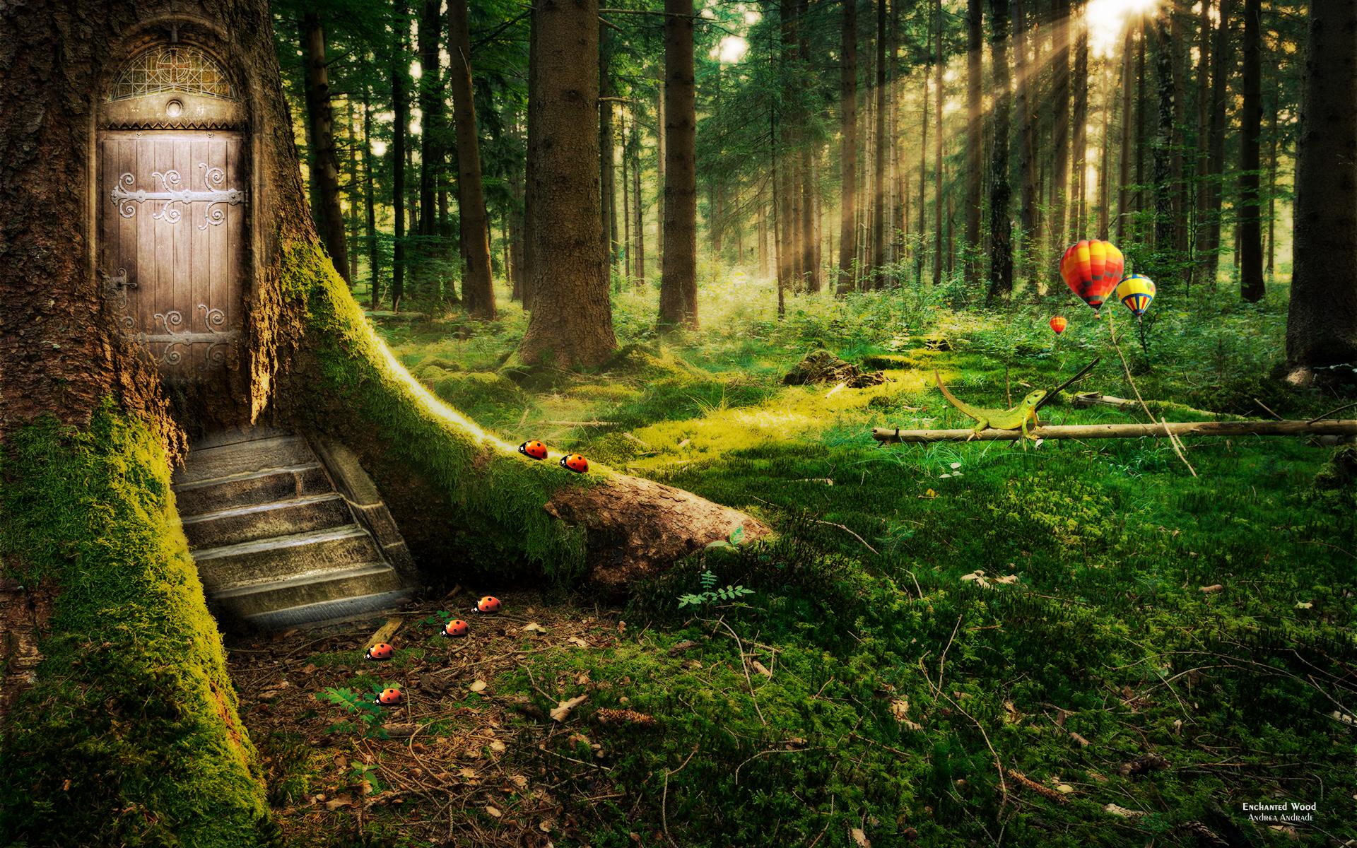 Forest Wallpapers for Desktop - WallpaperSafari