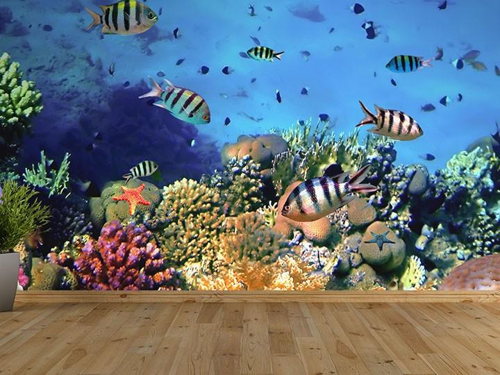 Home Wallpaper Coral Reef Self Adhesive Wallpaper 720x540