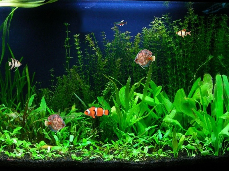 Screenshot   Aquarium Fish Screensaver   Nature Screen Savers 800x600