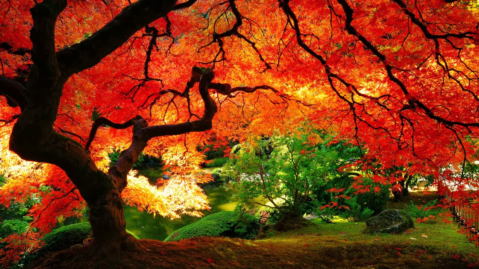 desktop wallpapers full of fall colors Fall wallpapers and Fall 1600x900