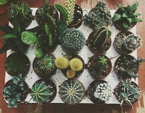 Cactus Wallpaper Tumblr - WallpaperSafari