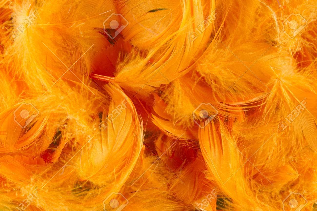 Orange Full Frame Softness Texture Feathers Wallpaper Stock Photo 1300x866