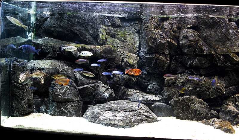 Fish For Sale PANGEA 3D AQUARIUM BACKGROUNDS 800x468
