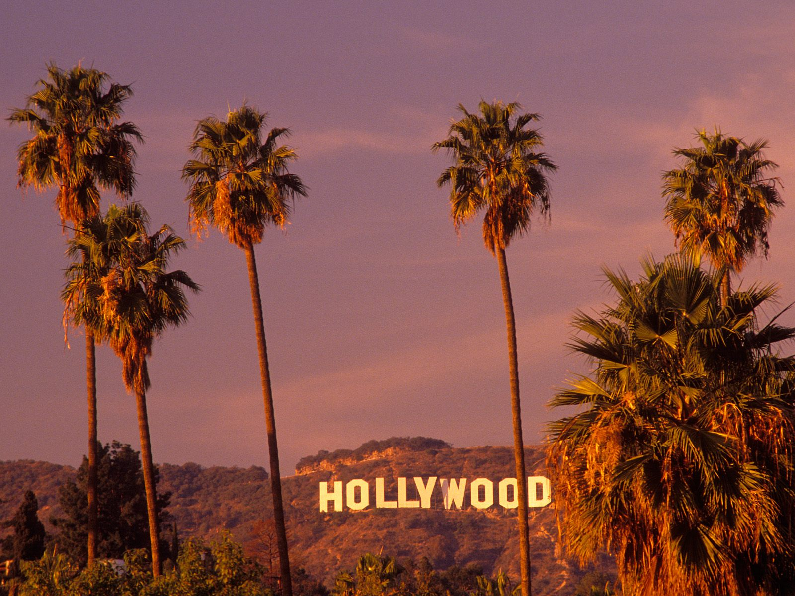 Hollywood California   Cool Backgrounds and Wallpapers 1600x1200