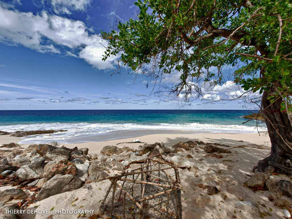 Hd Tropical Island Beach Paradise Wallpapers And Backgrounds: Free Tropical Beach Wallpaper