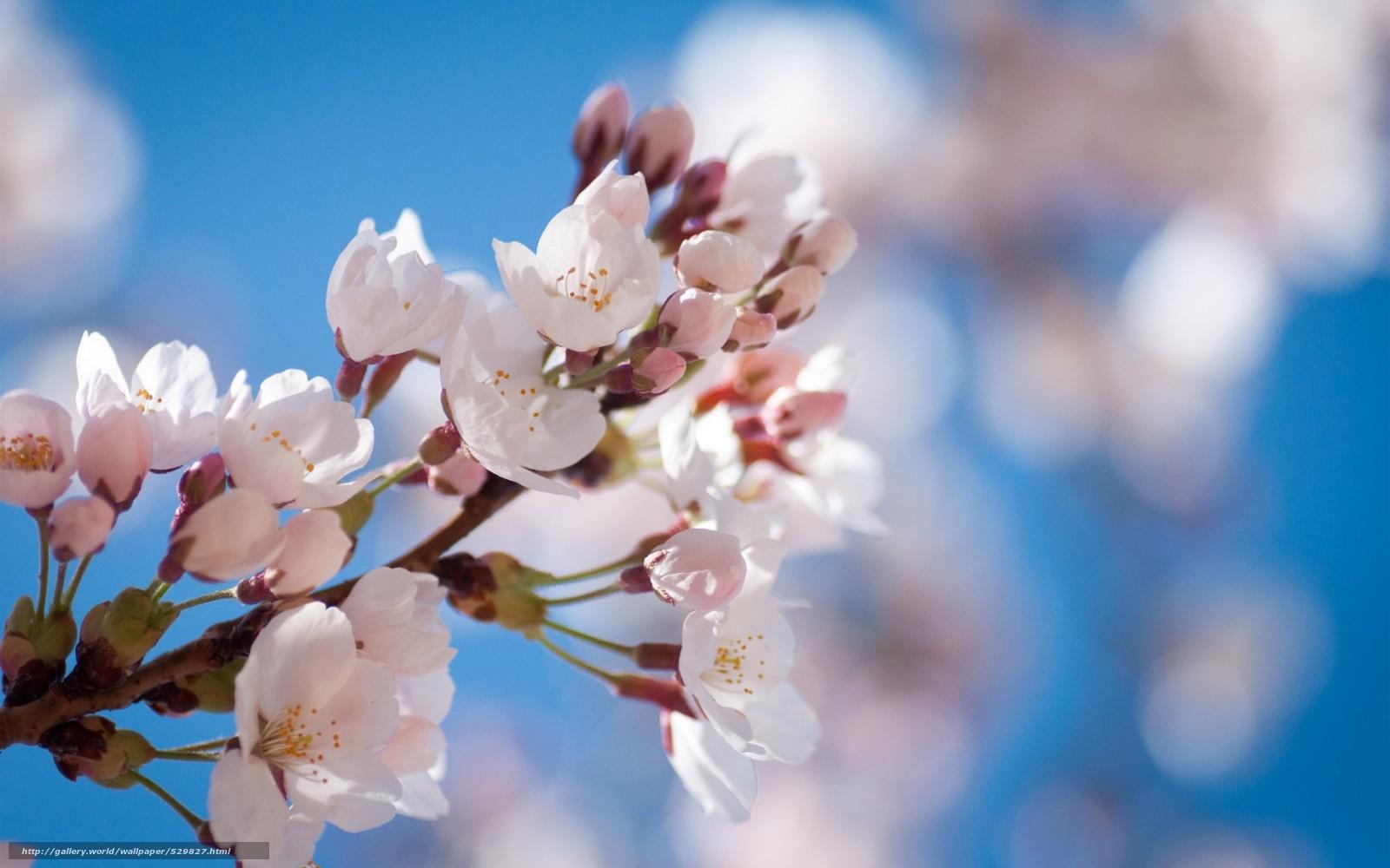Download wallpaper fruit branch bloom spring desktop wallpaper 1600x1000