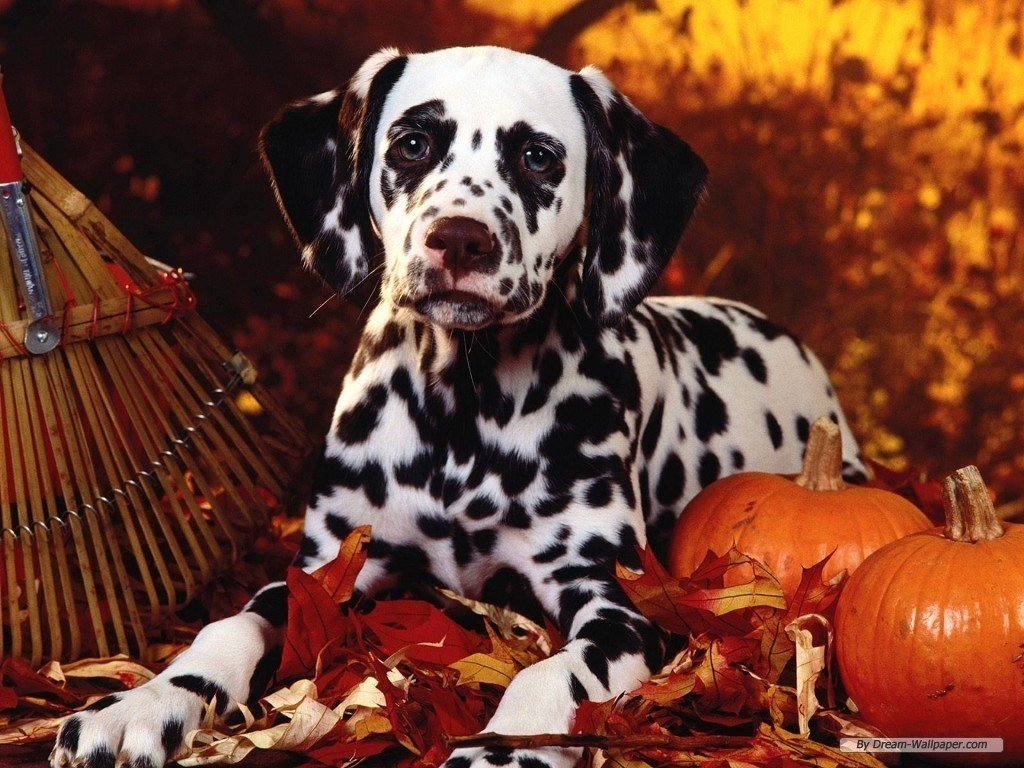 Fall Wallpaper With Dogs Amazing Wallpapers 1024x768