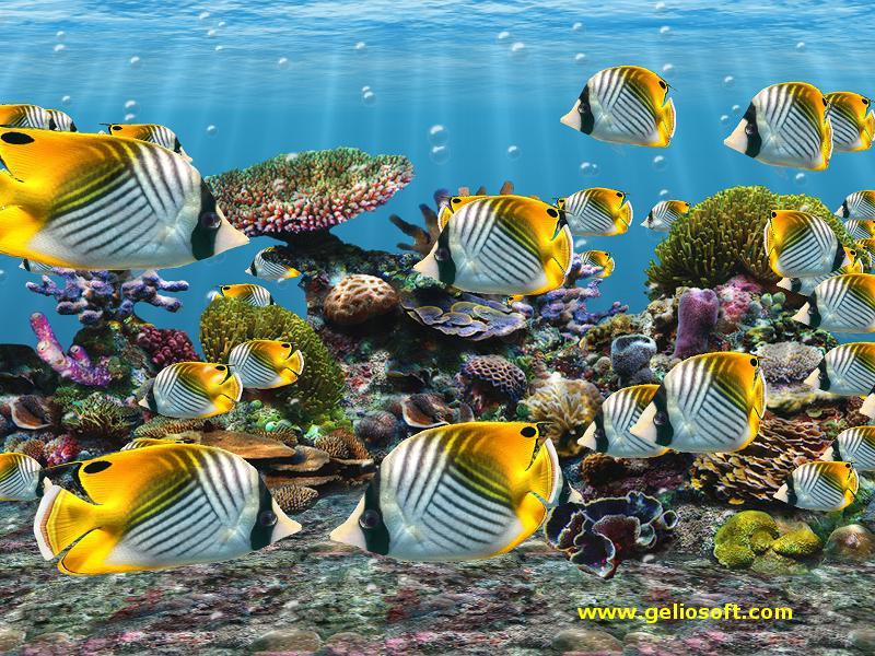 3D Screensaver and Wallpaper with Auriga Butterflyfish 800x600