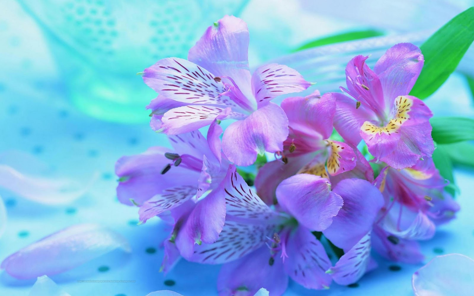 Beautiful Wallpapers For Desktop Purple Flowers HD Wallpapers 1600x1000