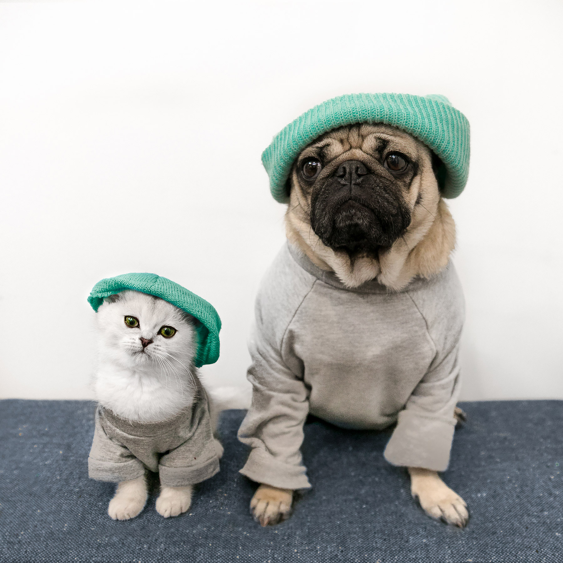 Dog the Pug Gets Kitten Sister Named Fiona PEOPLEcom 1800x1800