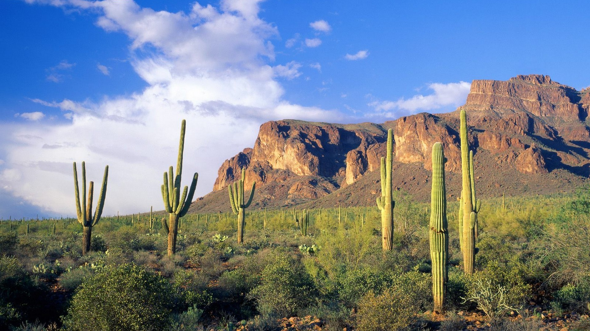 Arizona saloon cactus landscape western hdr f wallpaper 4000x3000 - Landscapes Forests Arizona National Cactus Tonto Wallpaper Background