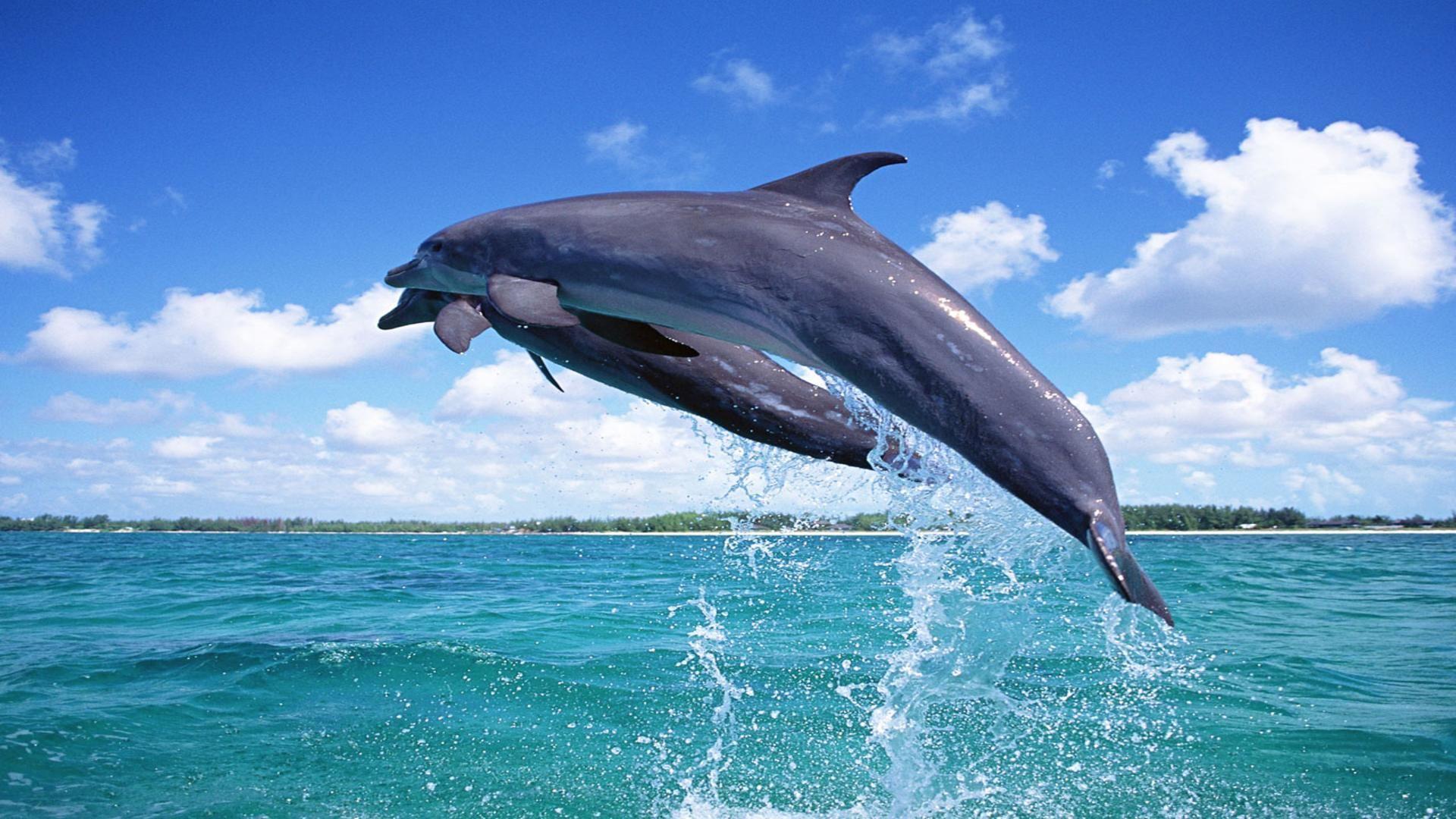 обои широкоформатные на рабочий стол бесплатно море и дельфины № 217021 бесплатно
