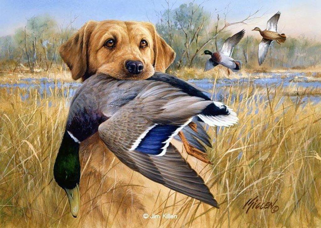 Hunting dog By Jim Killen wallpaper   ForWallpapercom 1024x728